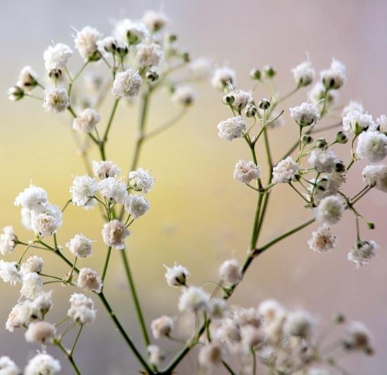 Купить семена цветов почтой по россии
