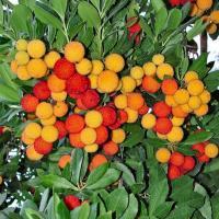 Купитьроссаду ягод и деревьеев кусты цветы библия в подарок на юбилей украина газпром